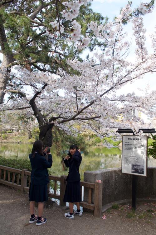 hanami2019blog - 3